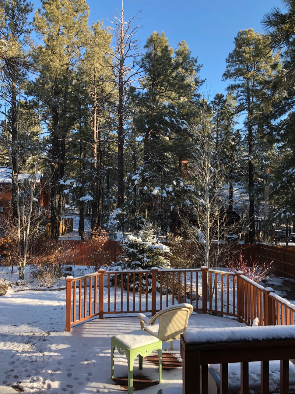Springtime snow in the backyard with pine trees and blue sky.