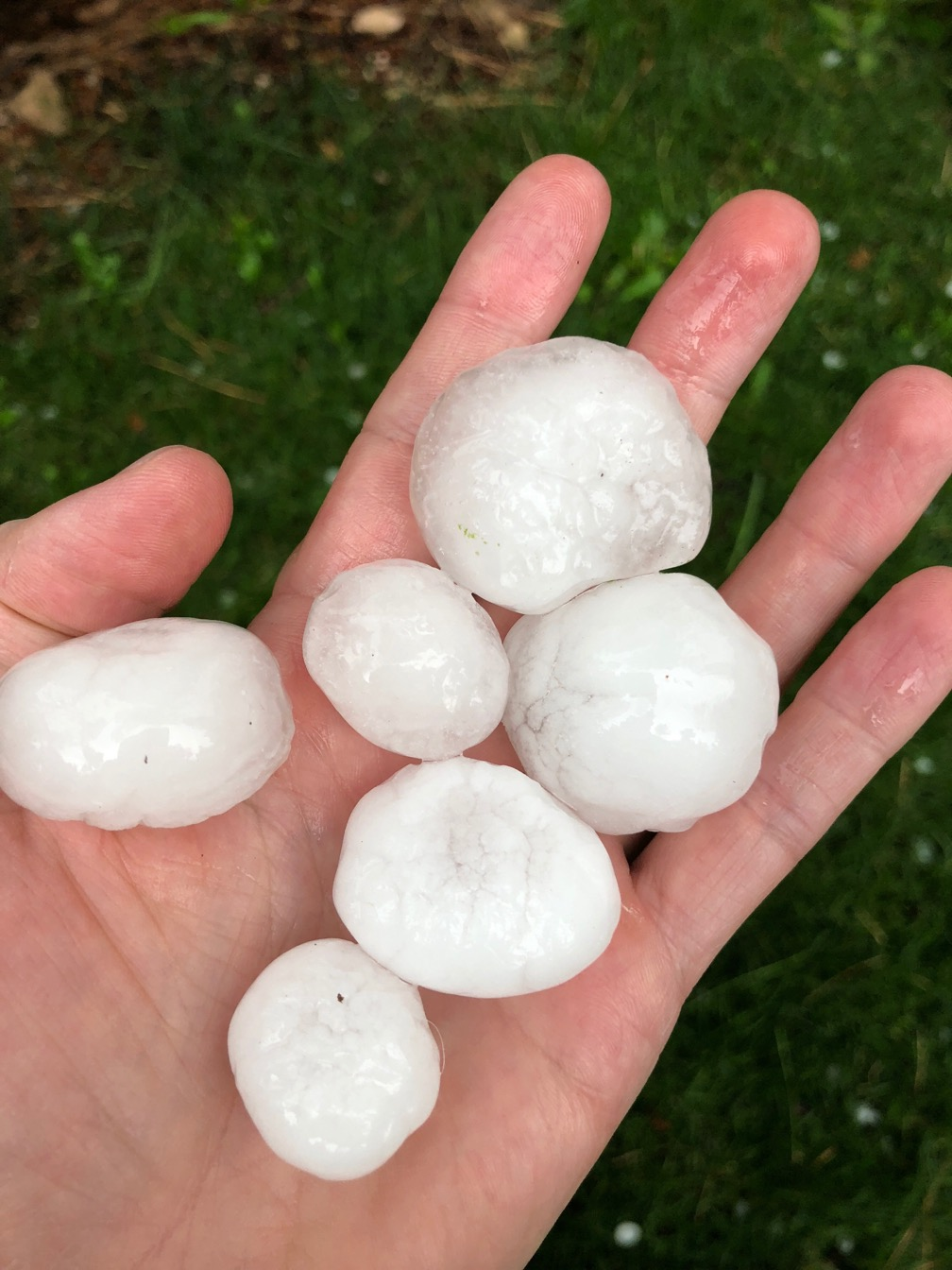 A photo of a handful of 1.5 inch hail in the palm of a hand.