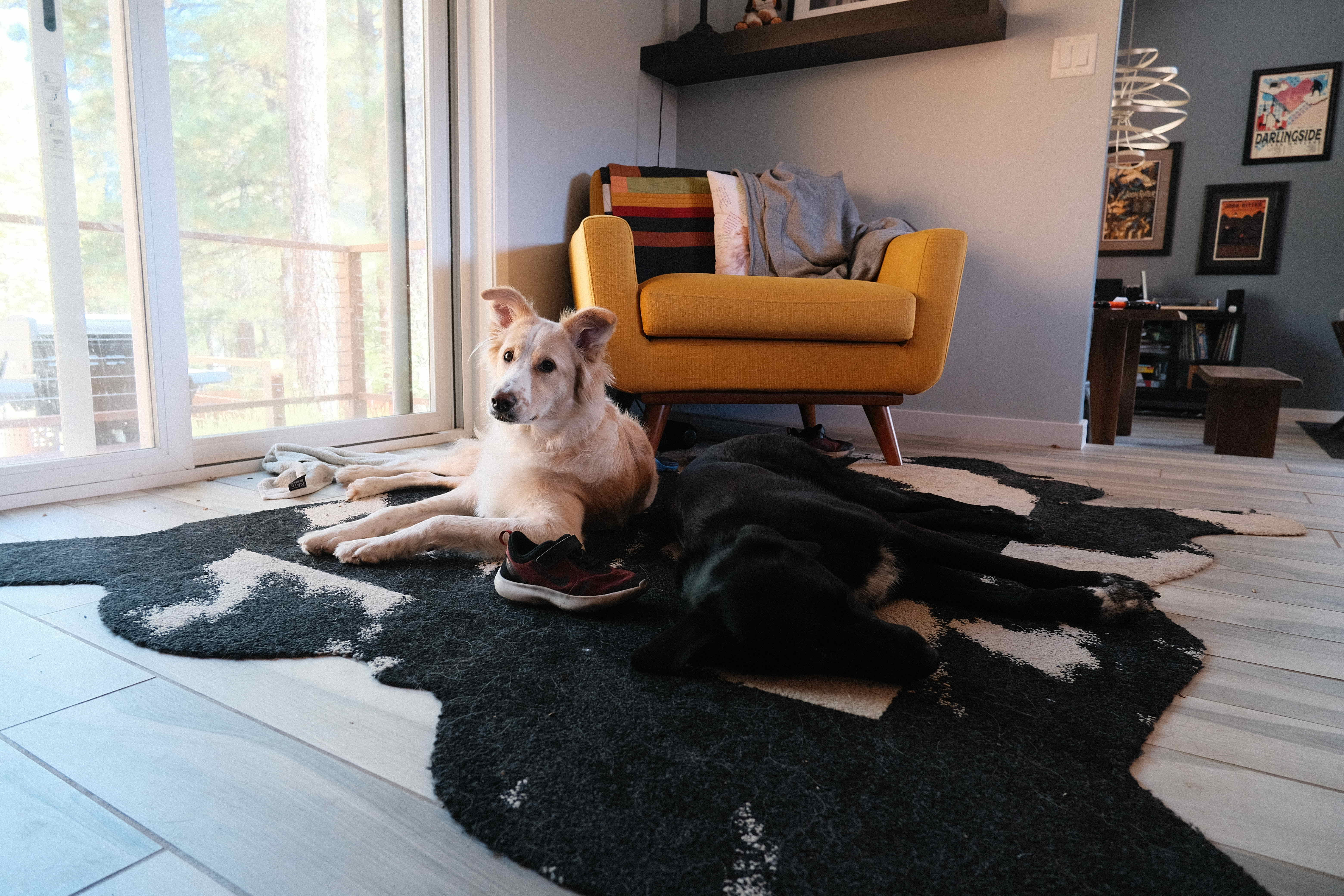 photo of a two dogs laying on a rug together