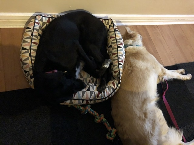 Photo of dogs sleeping next to one another