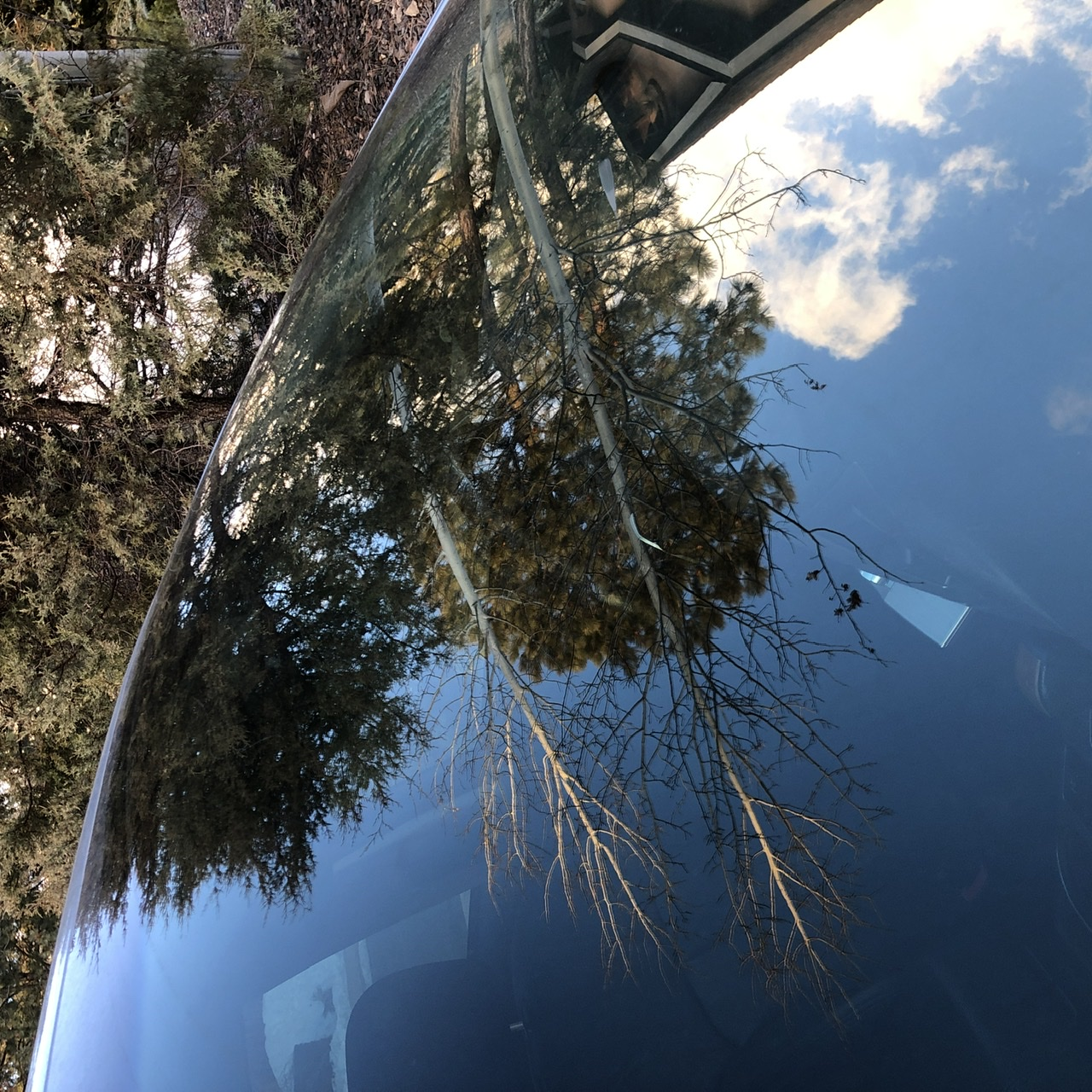 Trees with sunrise light reflected in a windshield