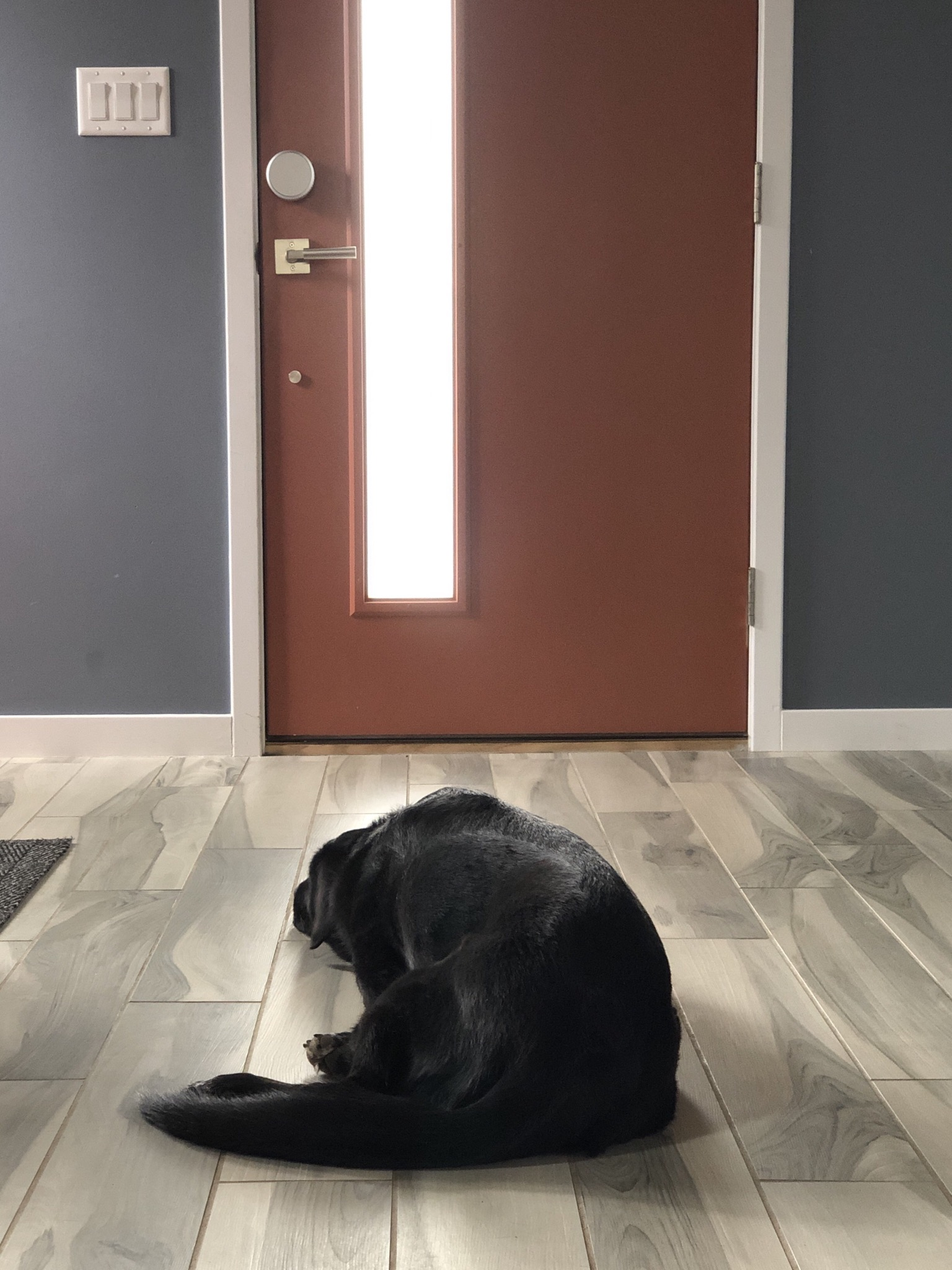 Photo of a black dog laying in front of a closed door