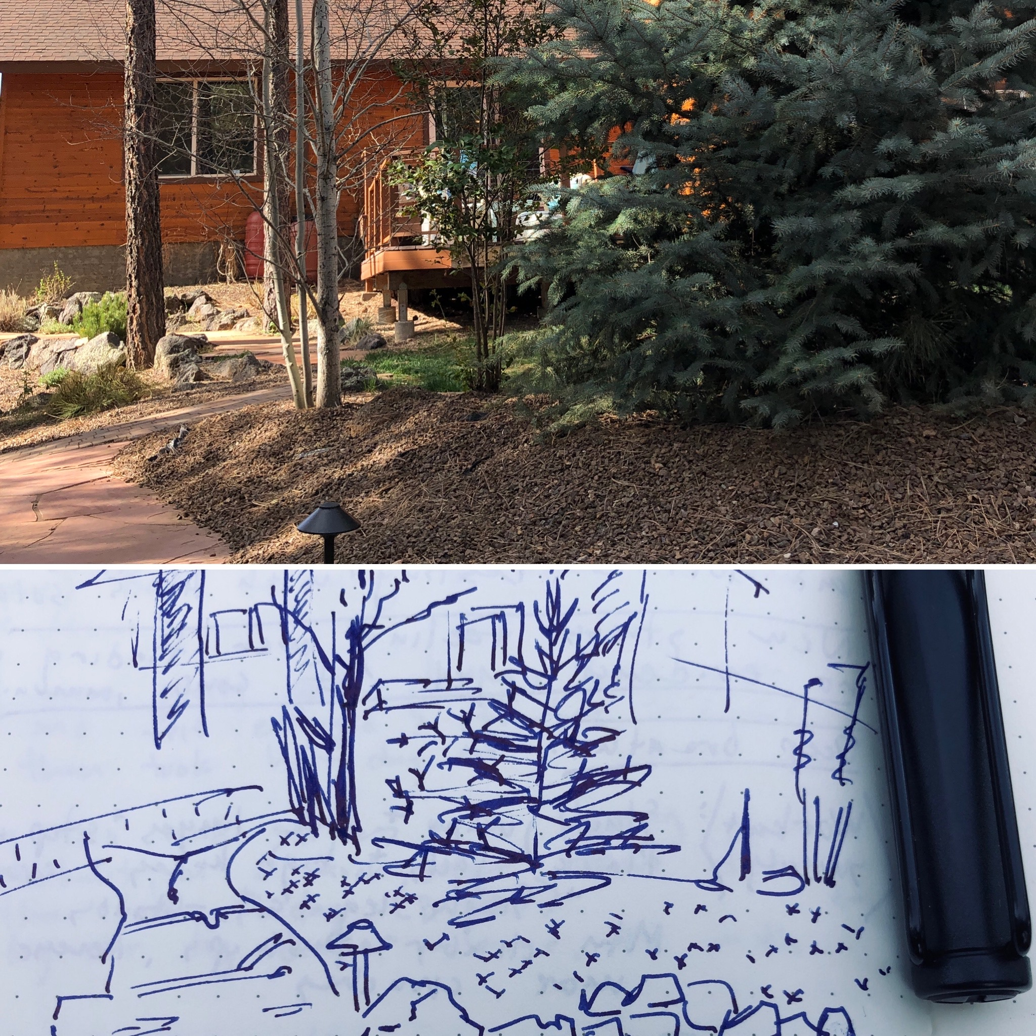 Photo of a small patio, pine tree and house beyond, with a sketch of the same view below jt.