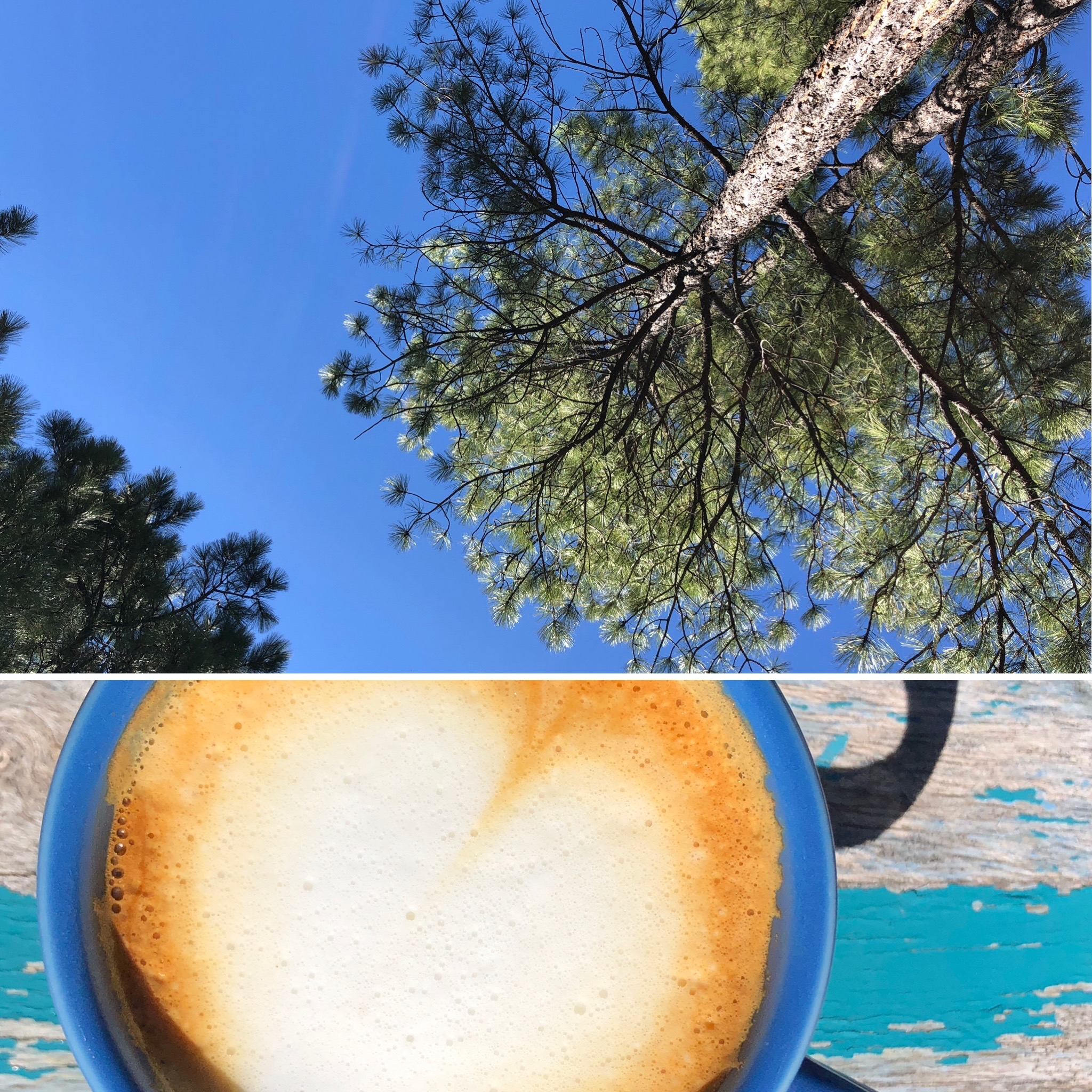 Photo collage of a cappuccino and pine trees against the blue sky