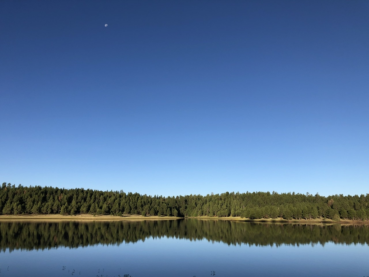 Trees and shoreline reflecting in a still lake, with a near full moon high overhead.