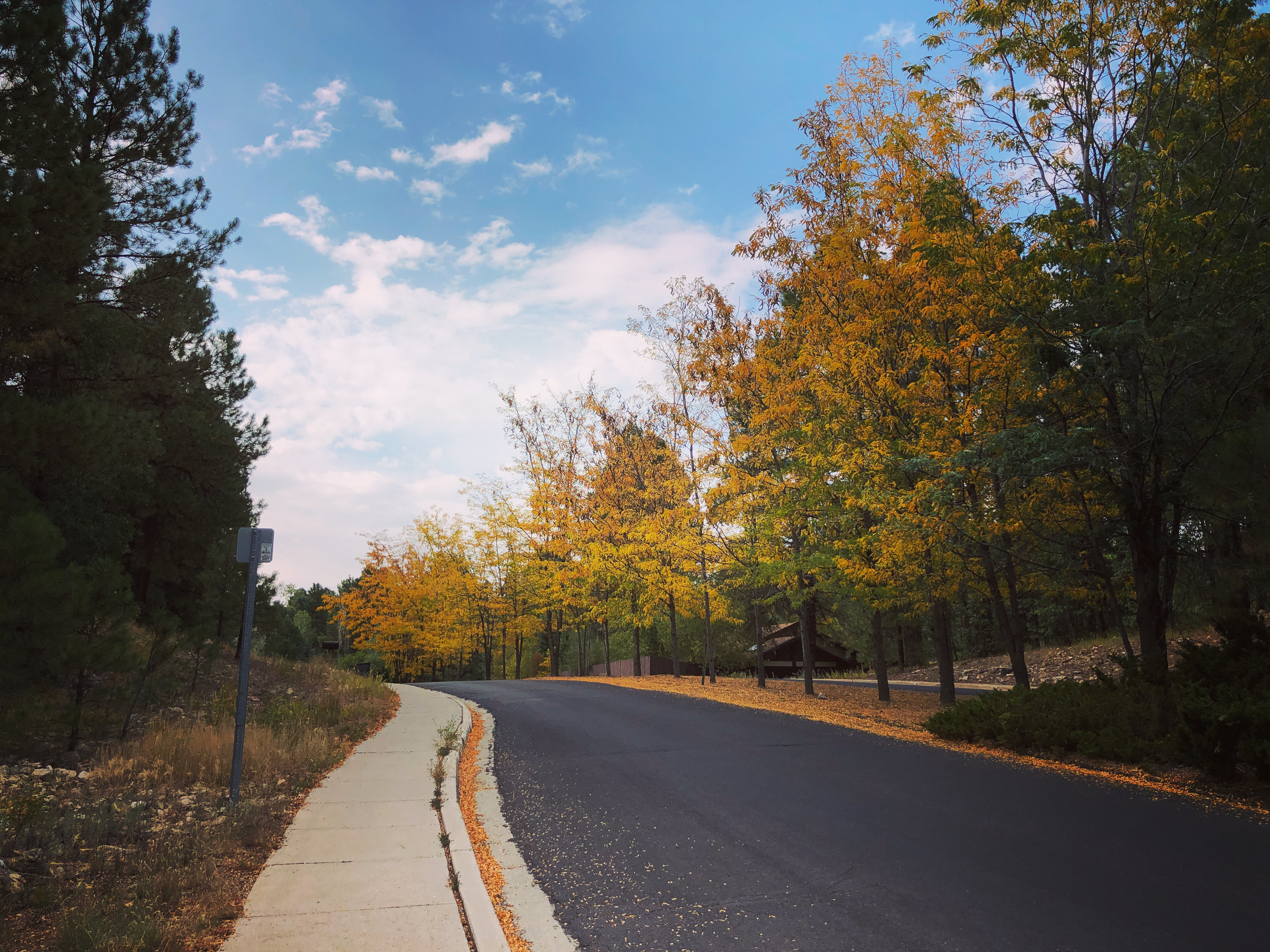 Photo of a row of trees with blue, cloudy sky. The leaves have turned brown and gold.