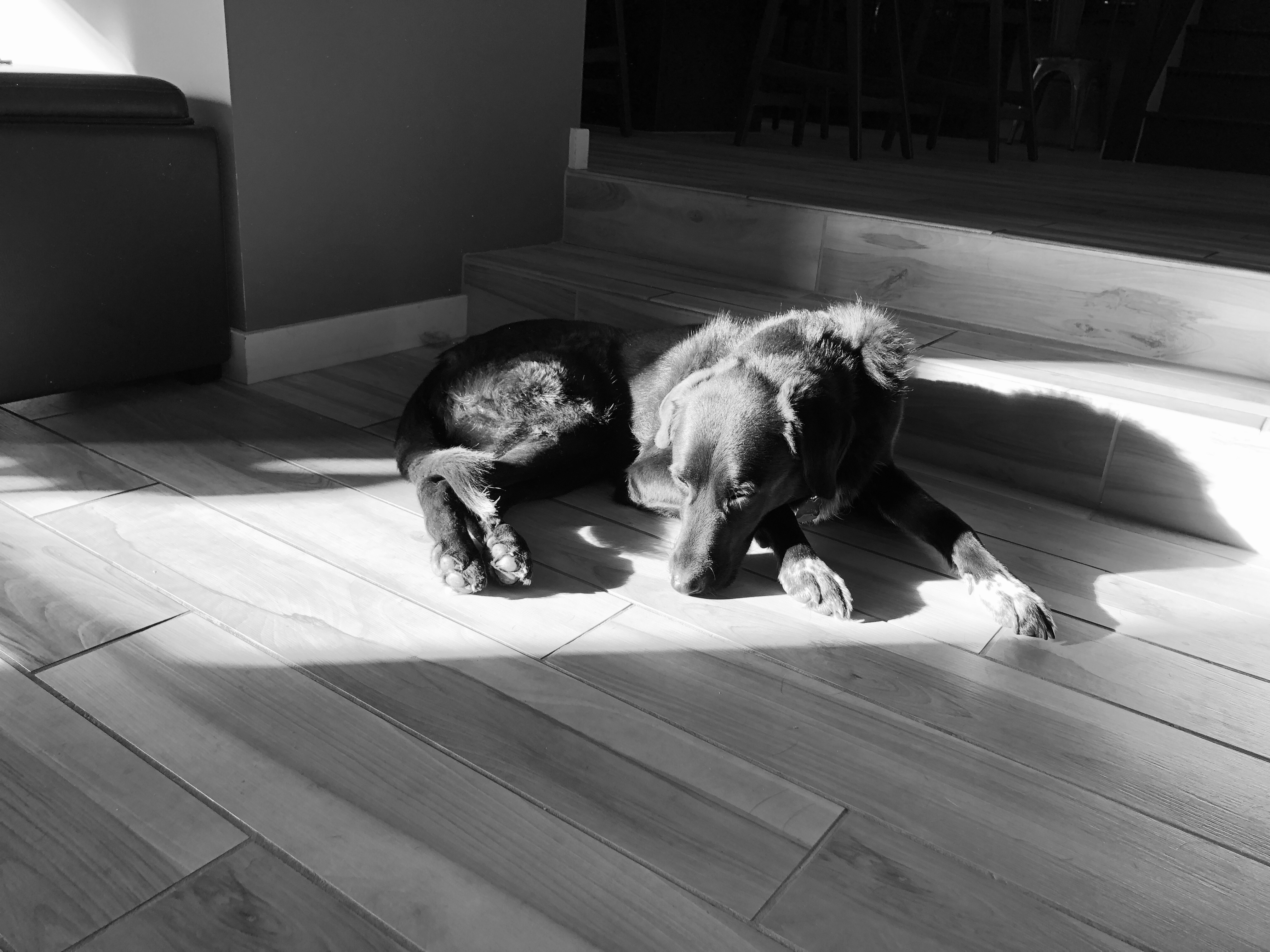 Monochrome photo of a dog laying on the floor in a bright sunbeam