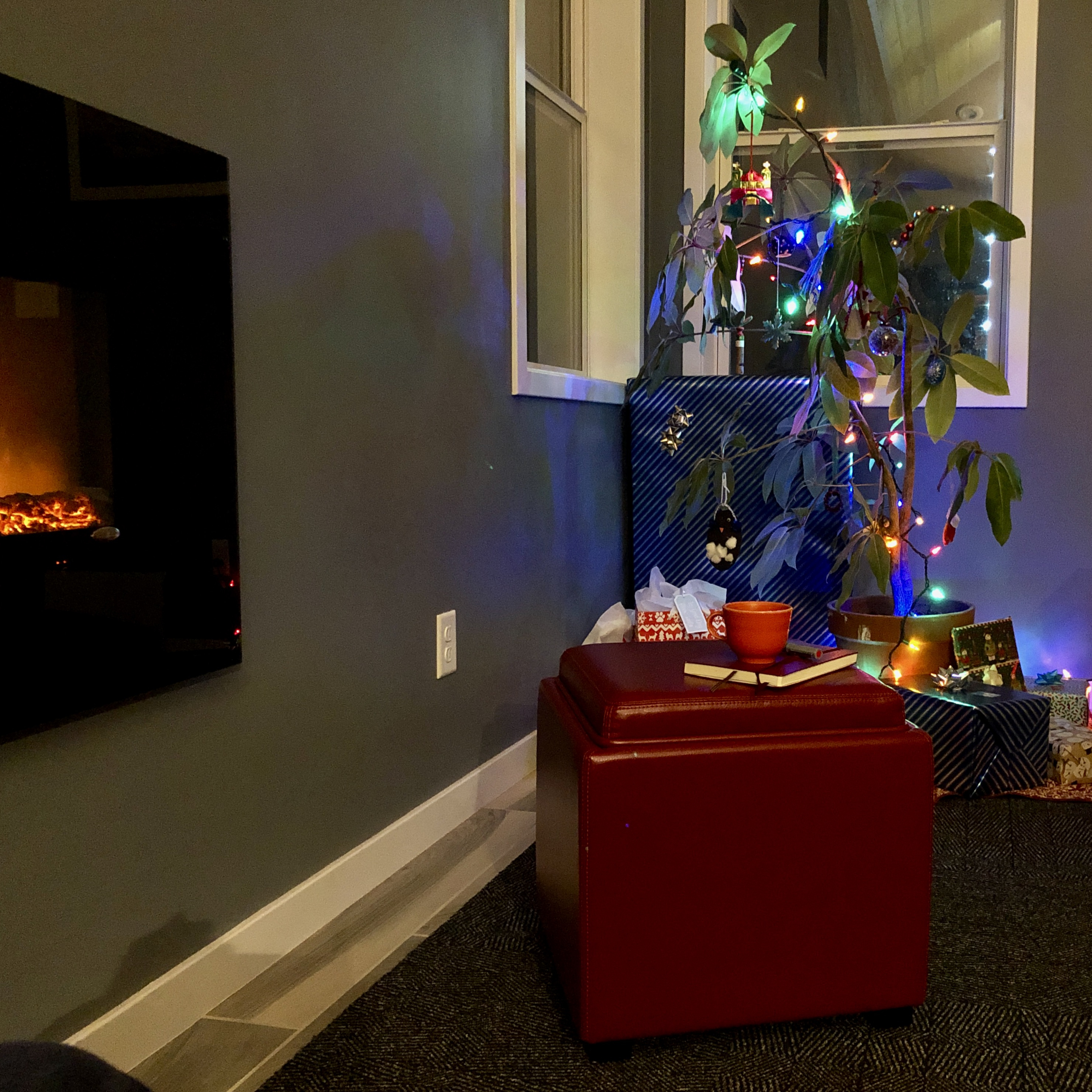 a ficus plant decorated for Christmas, beside a fireplace