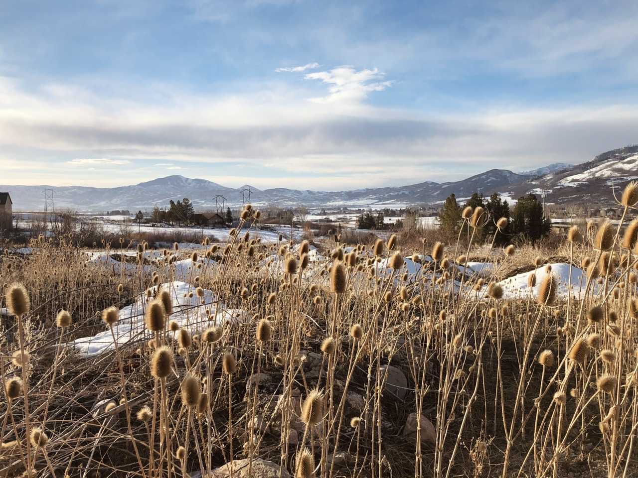 A. landscape with snow and morning light in a hazy blue sky, and dry cattails in the foreground